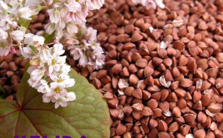 Heljda i njene nutritivne vrednosti