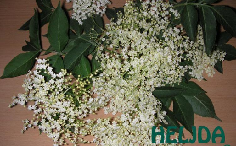 Heljdine palačinke sa cvetom od zove