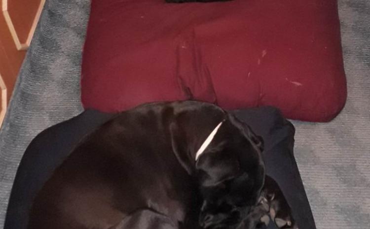 Jastuci od heljde za pse