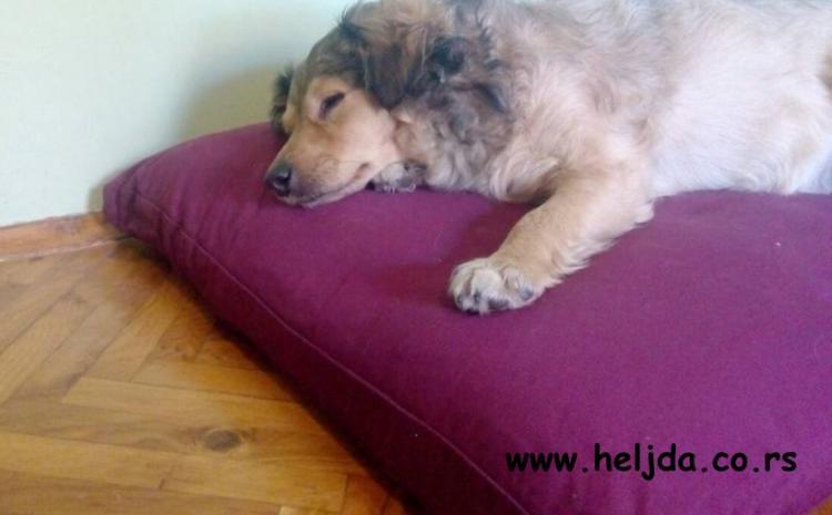 Evo kako jedan pas iz Kragujevca, uživa