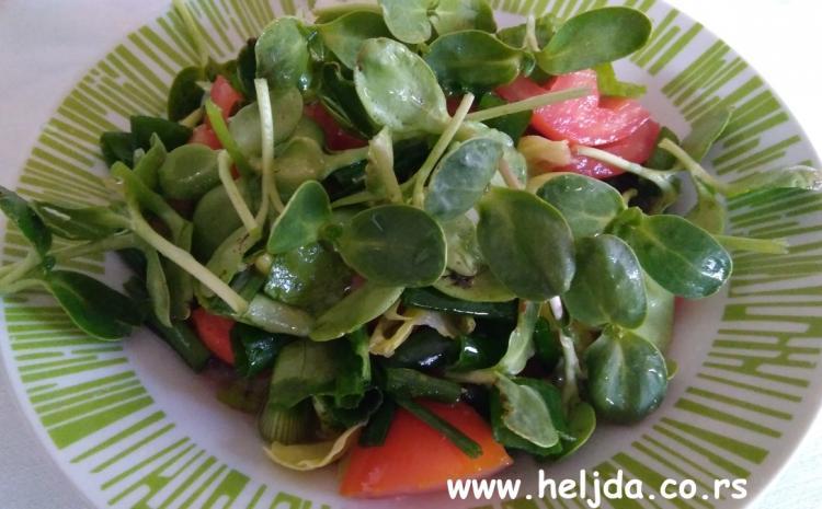klice suncokreta u salati