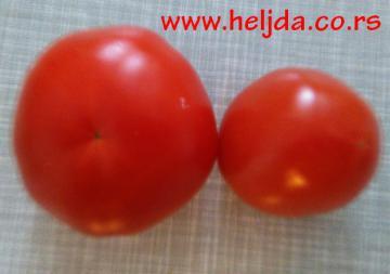 Plastični paradajz